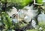德清湿地公园繁殖期白鹭图片