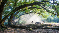 江西霞浦杨家溪大榕树下的农家夫妇图片
