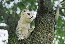 小猫爬树图片