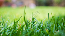绿色的草地图片