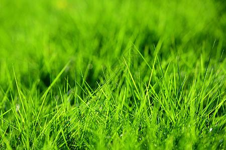 草地的背景图片