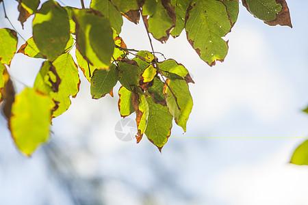 秋天里叶子变黄图片