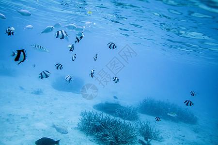 旅行中潜水看到的海底世界图片
