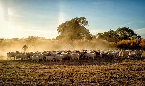 草原放羊人牧归图片