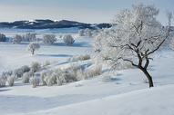 冬日坝上图片