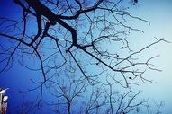 秋天天空树干树枝图片