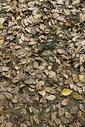 秋天树林里落叶满地图片