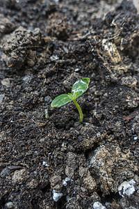 春天萌芽从土地中生长出来图片
