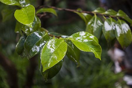 雨天雨水中被打湿的叶子图片