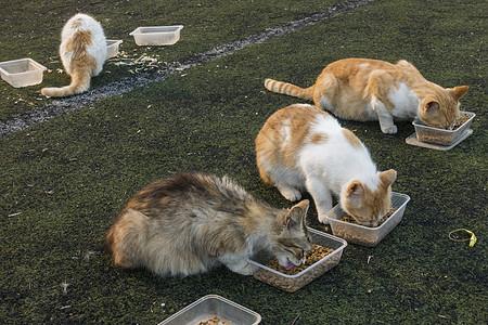 流浪猫在好心人的帮助下进食图片