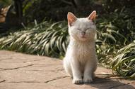 猫的独特表情图片