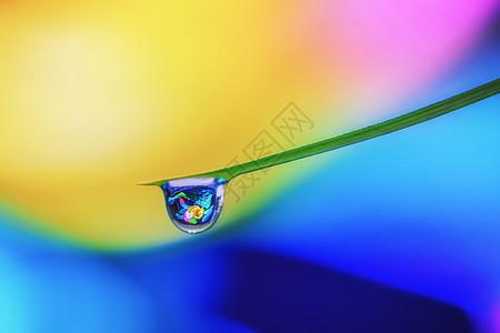 叶尖的水珠图片