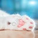 猫咪爪子上的肉垫图片