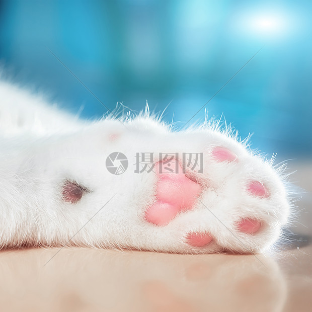 猫咪爪子上的肉垫