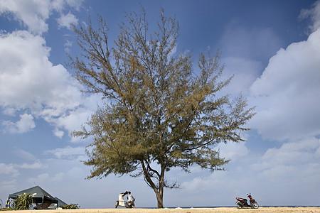 旅行到普吉岛在蓝天大树下有情侣图片