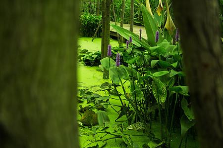 公园的绿叶图片