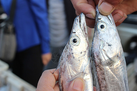 刀鱼 带鱼图片