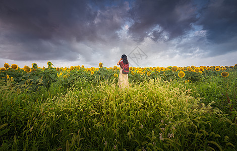 向日葵花丛中的美女背影图片
