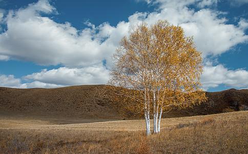 草原上的一棵树图片