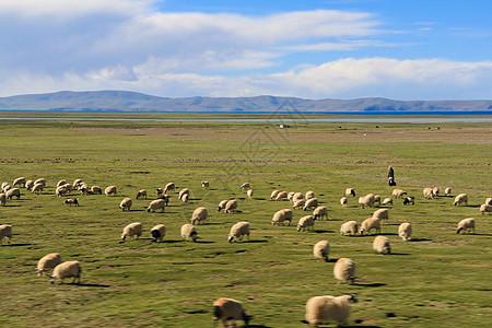 青藏高原的牧羊人图片