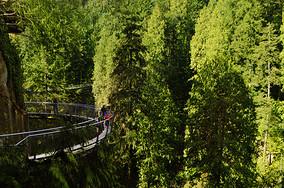 加拿大皮卡拉诺吊桥公园图片