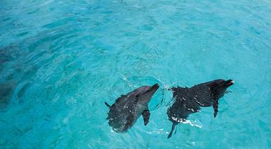 冲绳水族馆海豚图片