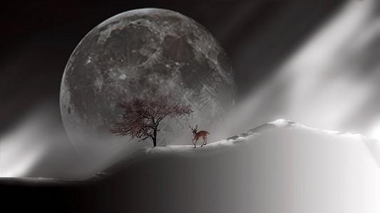 月亮下的小动物图片