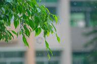 雨中绿叶图片