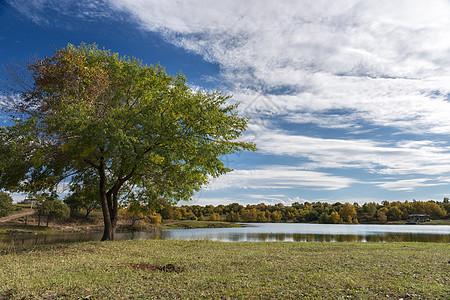 长在湖边的风景树图片