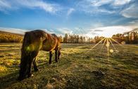 蒙古草原上的骏马图片