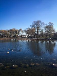 湖面上的鸭子湖底的石头图片