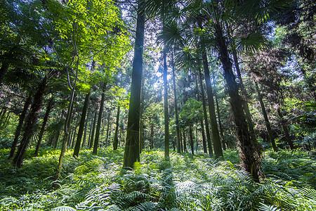 阳光普照的深山树林图片