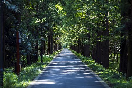 树林深处的小路图片