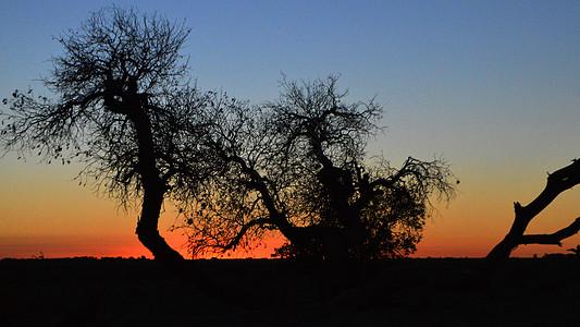 额济纳旗黑城子枯萎胡杨林风景照图片