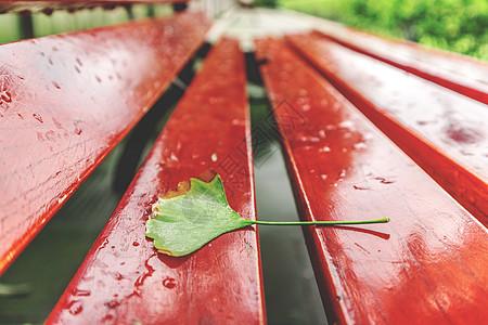 木椅上的落叶图片