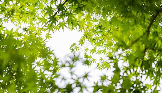 绿色植物素材高清图片