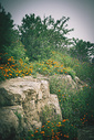 爬山路途的风景图片