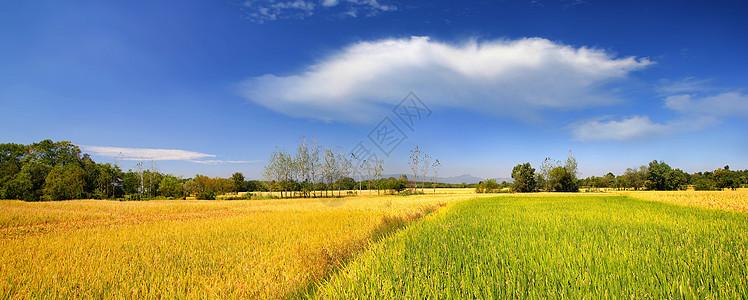 田园秋色图片