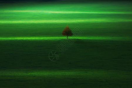 草原之歌图片