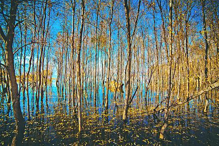 洱海水林图片