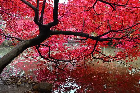 苏州天平山秋色红叶风景照图片