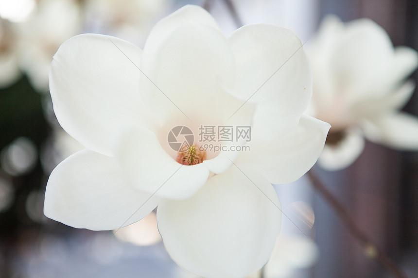 阳光下的花香图片