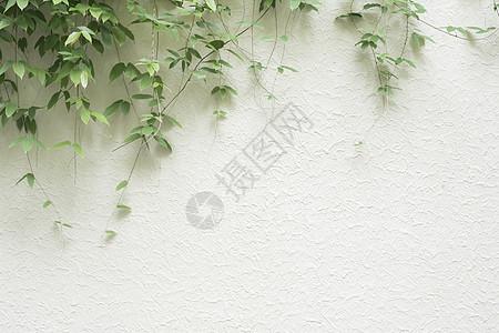 简约树叶素材图片