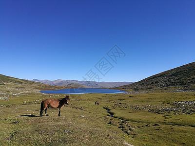 小黑湖和小马驹图片