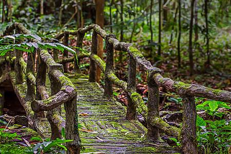 森林中的木桥图片