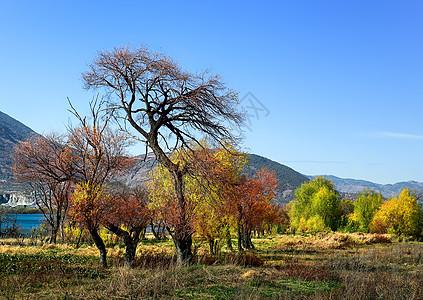 云南洱海边造型漂亮的树图片