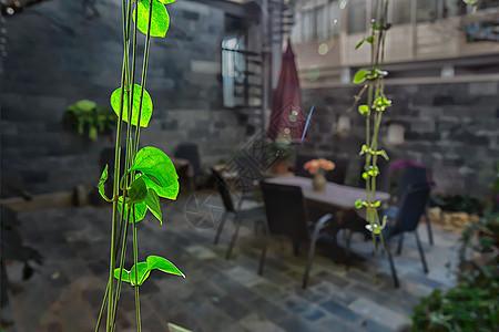 休闲庭院中的绿色树叶图片