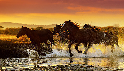坝上草原奔跑的马图片