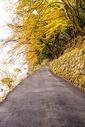 日本岚山图片