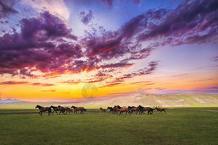 草原奔跑的马图片